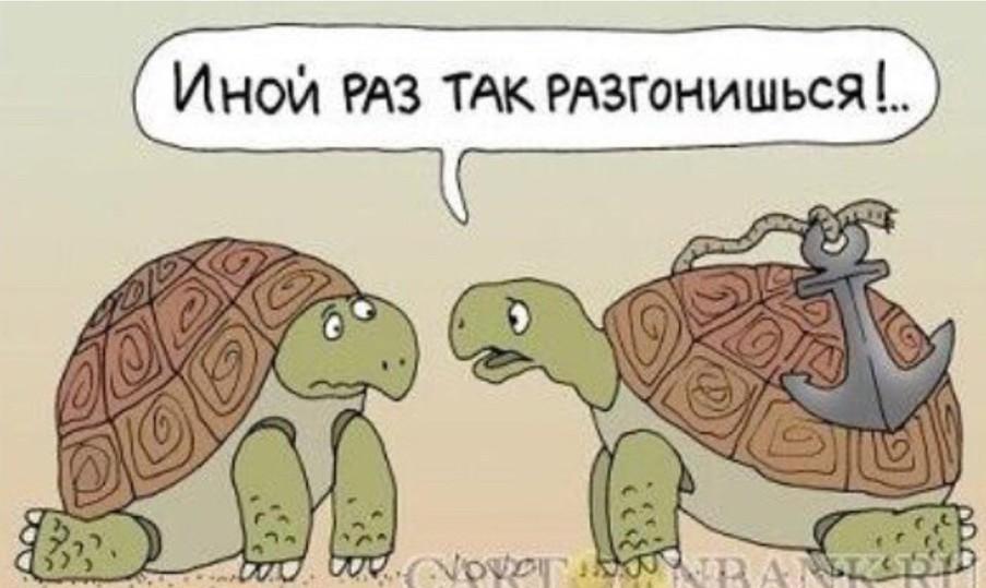 Анекдоты Про Черепах