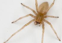 Ученые в Сочи открыли неизвестных науке пауков