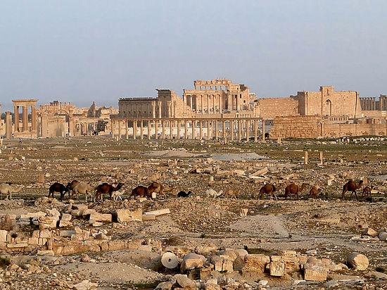 Боевики ИГ устроили массовое обезглавливание у стен античной Пальмиры