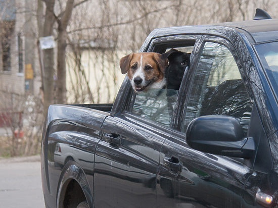 Советы: что нужно помнить при перевозке домашних любимцев  на автомобиле