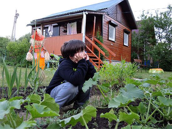 Кто польет ваш огород, если вы не смогли выбраться на дачу