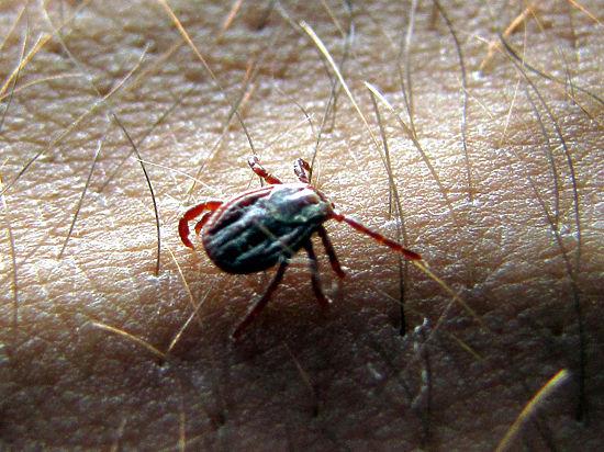 Как спасаться от клещей: действенные способы борьбы с паразитами