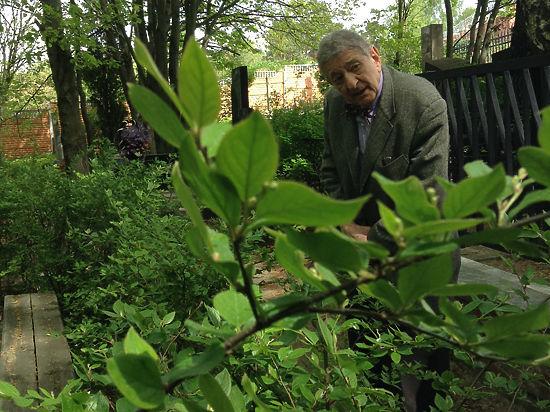 Американский профессор, на склоне лет приехал поклониться могиле автора «Мухи-цокотухи»