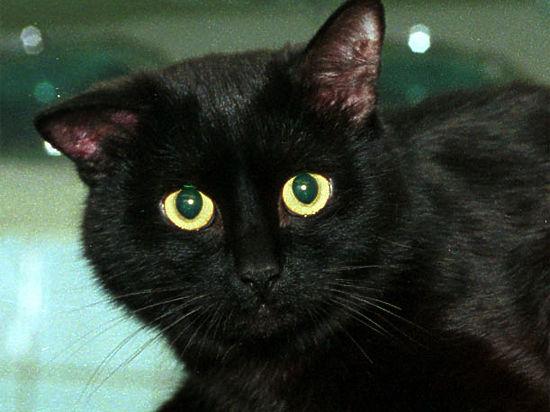«Охота» за сосисками закончилась для кота, принадлежащего жительнице северо-востока столицы, сильнейшими ожогами