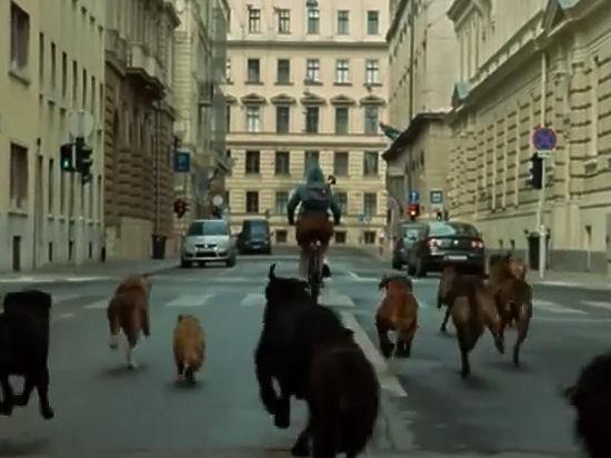 В Москве показали фильм о восстании бродячих собак