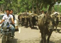 От сильной жары в Индии погибли несколько сотен человек