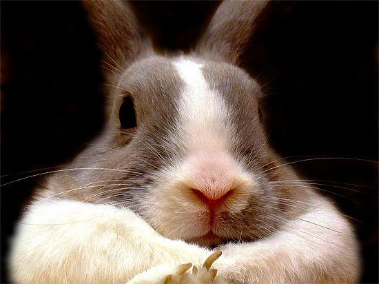 Датский радиоведущий убил крольчонка в прямом эфире и съел его на ужин