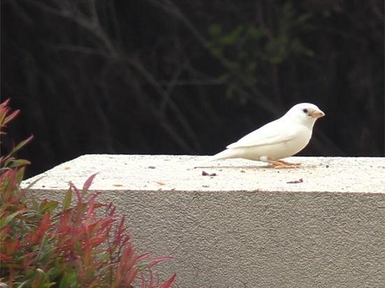 Такие птицы встречаются раз в сто лет