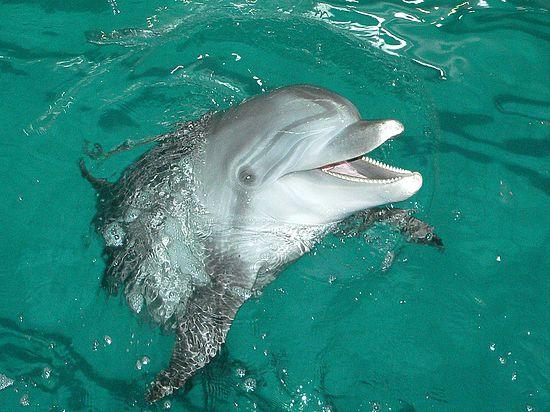 Украинская армия выделяет на кормление беременных дельфинов денег больше, чем на бойца