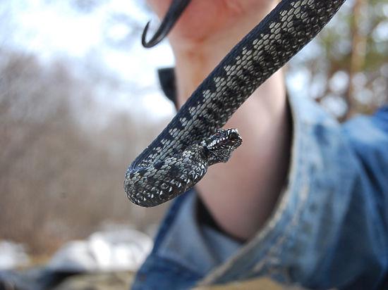 Пособие по сексу со змеями