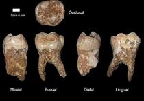 Ученые изучили пищевой рацион людей древности
