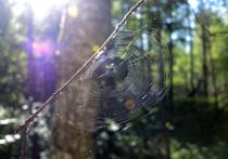 В подмосковной лесополосе нашли мертвую девушку