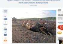 Сахалинское чудовище оказалось северным плавуном