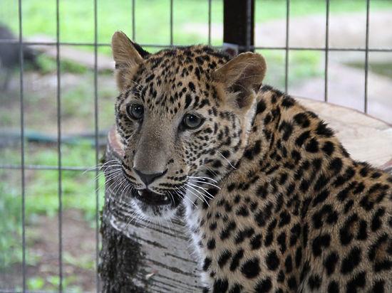 Хищники с Шелепихинской набережной нашли новый дом в центре реабилитации диких животных