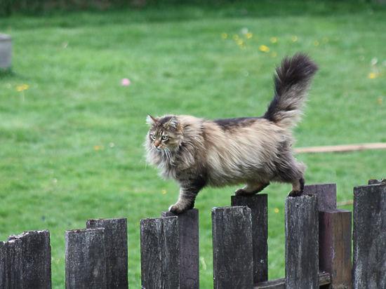 Что ожидает кошку на природе