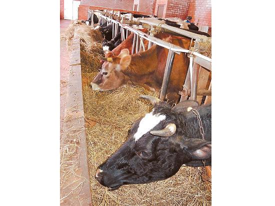 В России наметился дефицит мясо-молочной продукции