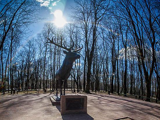 Смоляне собирают подписи против возвращения статуи оленя в Калининград