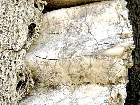 Во Франции археологи обнаружили древние фрагменты останков человека