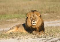 Щварценеггер ответил дантисту из США, убившему льва Сесила