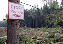 Тяжелая судьба лесных инвестпроектов Красноярского края