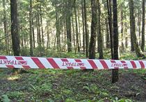 Детектив с короедами: как пилят подмосковный лес