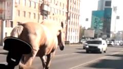 В Челябинске по оживленной дороге разгуливает лошадь