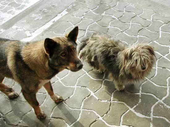 Собак и кошек в Бурятии заморят голодом