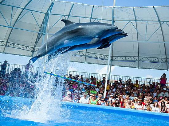 Интернет-пользователи призвали звезд  отказаться от участия в шоу  «Вместе с дельфинами»
