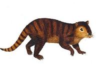 В США найдены останки бобра, повидавшего динозавров