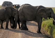 Подсказка к лекарству от рака хранилась в организме слонов