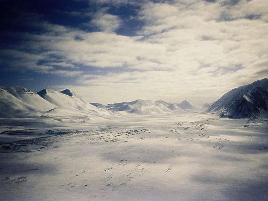 В ходе полярной экспедиции исследователи изантарктического гриба смогли извлечь вещество thelebolan (телеболан)