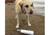 Бутылка с письмом москвичей, выловленная англичанином в море, поразила ученых