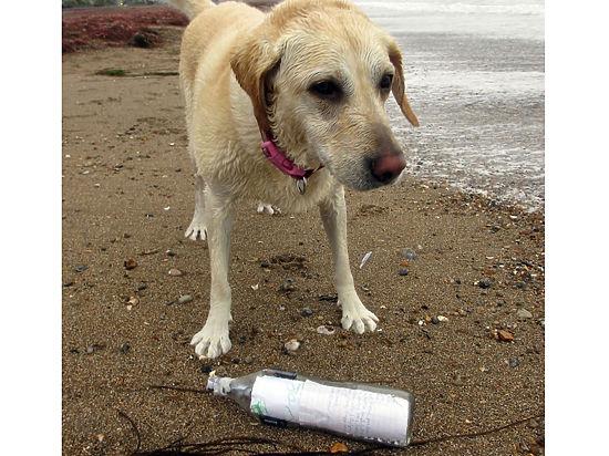 Отправленное из Болгарии послание нашла собака по кличке Шеба