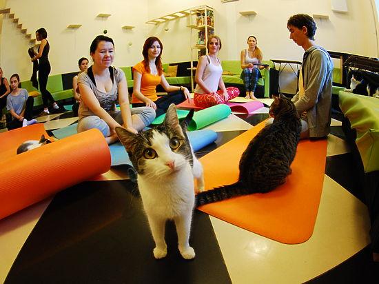 Усатый йог. Казанцы тренируются на кошках