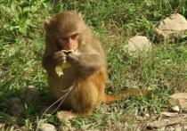 Основным отличающим качеством человеческого мозга отмозга у шимпанзе является то, что нервная система человека имеет более высокую пластичность иона легко   поддается внешнему воздействию