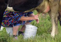 Со времен песенки из советского мультфильма «Пейте, дети, молоко — будете здоровы!» молочные реки сильно обмелели