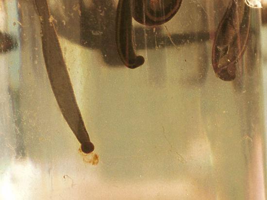 В Могоче из кранов полилась вода с пиявками