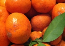 Правительство намерено на днях опубликовать список запрещенной турецкой еды