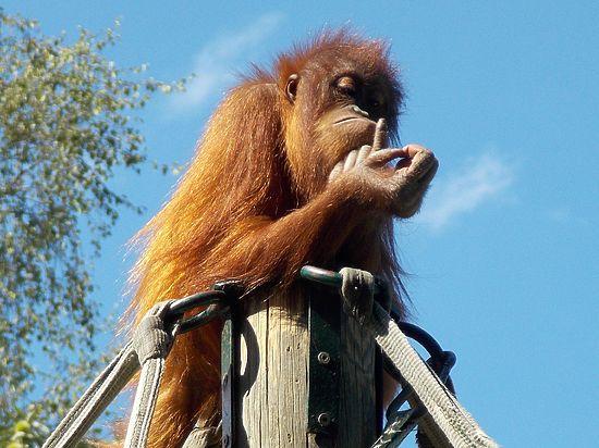 Астролог посоветовал, как себя вести в год Огненной обезьяны