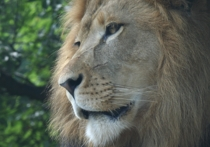 Парк львов «Тайган», расположенный в Белогорском районе Крыма и ялтинский зоопарк «Сказка» минувшим вечером опять погрузились во тьму