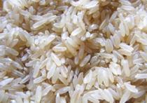 Британские ученые назвали быстрорастущий и неприхотливый ГМО-рис единственной надеждой человечества на спасение от голода в долгосрочной перспективе