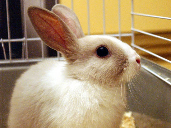 Депутаты ЛДПР показали в Думе кролика, который будет жить вечно