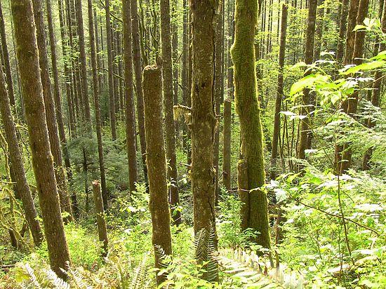 Дезертир, 11 лет скрывавшийся в лесах Камчатки, объяснил причину побега