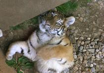 Ялтинский зоопарк ʺСказкаʺ, жители которого в период энергетической блокады Крыма оказались на грани гибели от холода, понес вторую тяжелую потерю