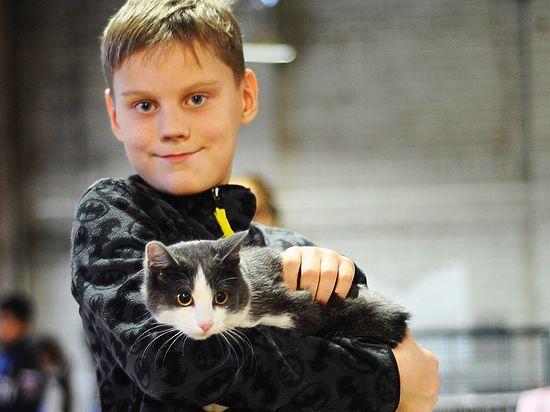 На третьей выставке-ярмарке бездомных кошек усатых-полосатых брали «оптом»
