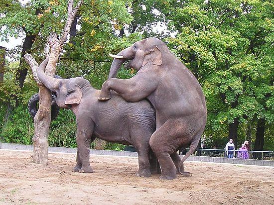 В Берлинском зверинце представят зоологических нацистов