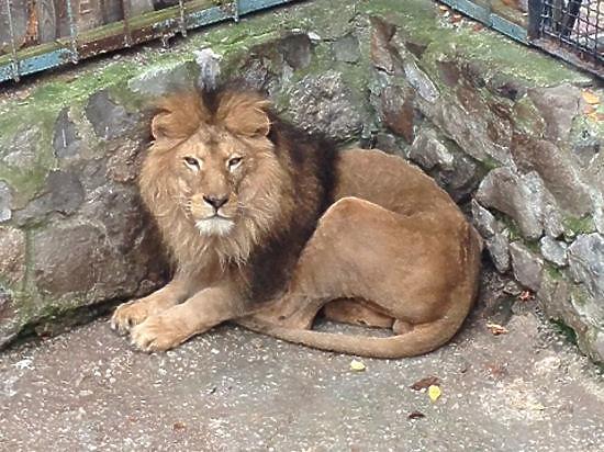 Осужденный директор «Тайгана» обороняет вход в зоопарк бронемашиной