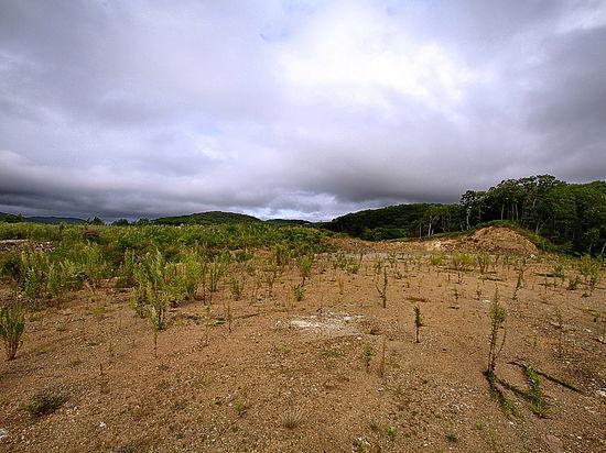 В Приморье проверяют, используются ли сельхозугодья по назначению