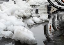 «МК» выяснил, на какие ухищрения приходится идти горожанам в связи с теплой зимой