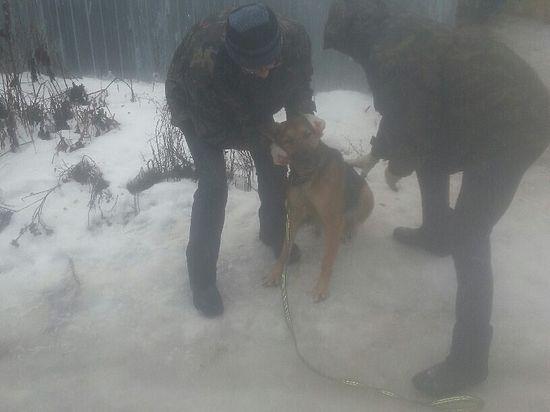 Собачья смерть. Власти уничтожили приют собак в Ковалях
